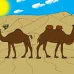 chameau1